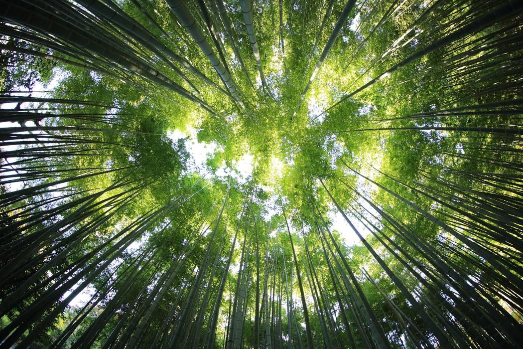 """""""Kimehetek! Mit tehetek?"""" – alkotói pályázatot hirdet az Erdőmentők Alapítvány"""